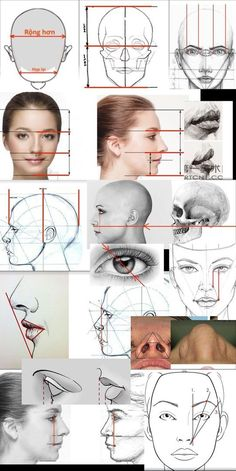 drawing faces step by step ; drawing faces for beginners drawing face proportions Drawing Face Shapes, Drawing Heads, Wall Drawing, Face Proportions Drawing, Drawing Lessons, Art Lessons, Drawing Tips, Sketch Drawing, Anatomy For Artists