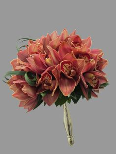 beautiful cymbidium