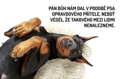 Nejkrásnější citáty o psech Just Smile, Dog Quotes, True Words, Monday Motivation, Animals And Pets, Quotations, Pitbulls, Dogs, Pets
