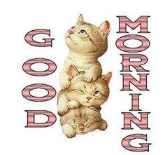 Good Morning & Happy Hump Day