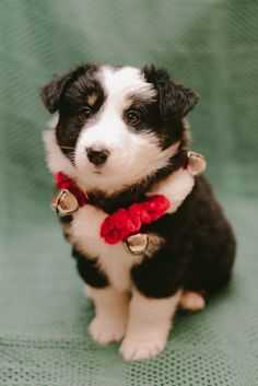 Moz. 7 weeks :) Border Collie from the group  {GROUP} Border Collies - Best Dog Breed Ever!