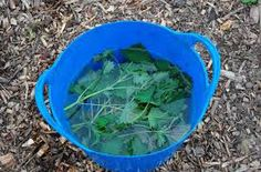 Make your own plant food by soaking nettles in water for a couple of weeks. Strain then dilute part plant food to 10 parts water) and fill your watering can. The plants will love you! Watering Can, Garden Hose, Remedies, Gardening, Canning, Vegetables, Plants, How To Make, Outdoor