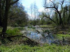 Naturschutzgebiet Kocks Loch