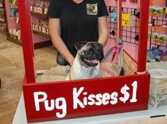 Bailey offering pug kisses at a rescue event:)