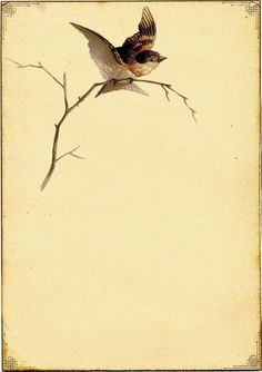 Vintage Bird Background
