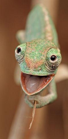 Chameleon. I want one!