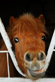 MIDGET (NJ)- 20 year-old 9hh miniature horse mare- companion/pasture pet only. Visit http://www.horserescueunited.org/horses.aspx or email lunar_aradia@yahoo.com to learn more!