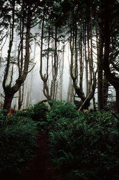 Fog on the Pacific Coast Trail - II | Flickr