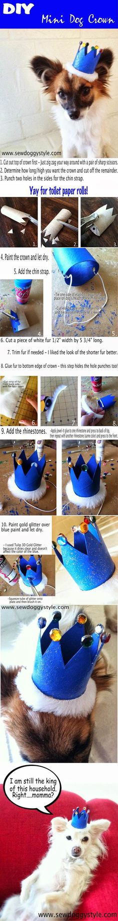For shelter dogs_ DIY Mini Dog Crown 2