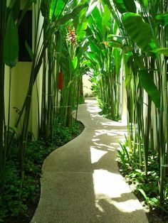 a beautiful walkway will transform your backyard, will direct the garden wanderings, lead to important points from your garden and make it easier to control and organize. small tropical garden 42 Amazing DIY Garden Path and Walkways Ideas Bali Garden, Balinese Garden, Side Garden, Garden Paths, Tropical Garden Design, Tropical Landscaping, Backyard Landscaping, Tropical Backyard, Tropical Plants