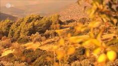 Altertum (Griechenland) Vineyard, Youtube, Outdoor, Early Modern Period, 18th Century, Greece, History, Outdoors, Vine Yard
