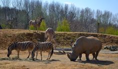 Group of animals in the open at Colchester Zoo. By: newbeltane
