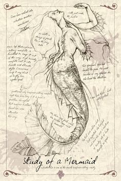 A Study of a Mermaid. Just part of the 'journal' series that I've been doing. Used mermaid stock from lockstock (This may sound like a silly question bu. A Study of a Mermaid Magical Creatures, Sea Creatures, Fantasy Kunst, Fantasy Art, Mermaids And Mermen, Drawings Of Mermaids, Real Mermaids, Art Drawings, Mermaid Artwork