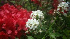 다른꽃사이에서 핀 꽃