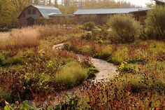 "the meadow garden at Tokachi Millennium Forest, on the northernmost island of Japan called Hokkaido,  designed by Dan Pearson Studio.  This is ""the brainchild of the visionary entrepreneur Mitsushige Hayashi, who acquired the land with a view to offsetting the carbon footprint of his national newspaper business, Tokachi Mainichi."""