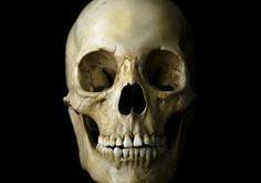 real human skull - Google Search