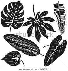 Tropical plant leaves vector silhouette collection.