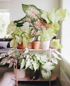 Outdoor Plants, Potted Plants, Garden Plants, House Plants Decor, Plant Decor, Plantas Indoor, Decoration Plante, Plant Aesthetic, Plants Are Friends