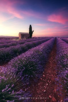 Provence, Valensole by Julien Loize on 500px