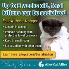 Up to 8 weeks old, feral kittens can be socialized.