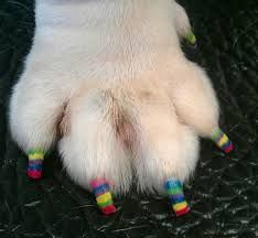 OK... we had to throw this one in here! Doggie Pedicured stripped Nails. #doggienails #dogpedicures #pedicure #pedicureart