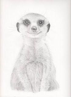 die 13 besten bilder von erdmännchen art | erdmännchen, zeichnungen und kunst