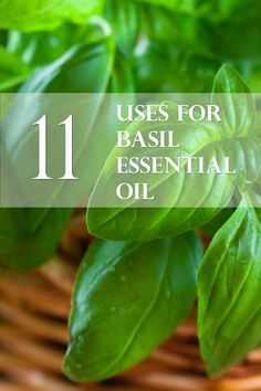 11 Uses for Basil Essential Oil- AJA Health