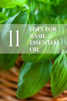 11 Uses for Basil Essential Oil- AJA Health