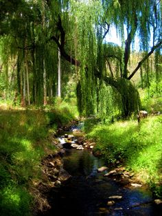 Lush wilderness From: Fairy Tales By Nature, please visit Weeping Willow, Willow Tree, Beautiful World, Beautiful Places, Beautiful Pictures, Romantic Places, Jolie Photo, The Fresh, Amazing Nature