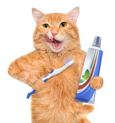 In order to ensure that your cat's dental procedure is done safely, you should ask your vet a list of questions prior to scheduling.