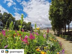 #hofgarten #bayreuth #visitbayreuth #blumen #lgs2016 #landesgartenschau2016