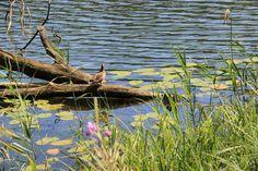 Am Schmalsee in Mölln finden wir zahlreiche Naturschaetze © TA.SH