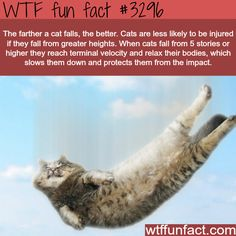 WTF fun fact #3296 ~ Cat fact in regards to falling.