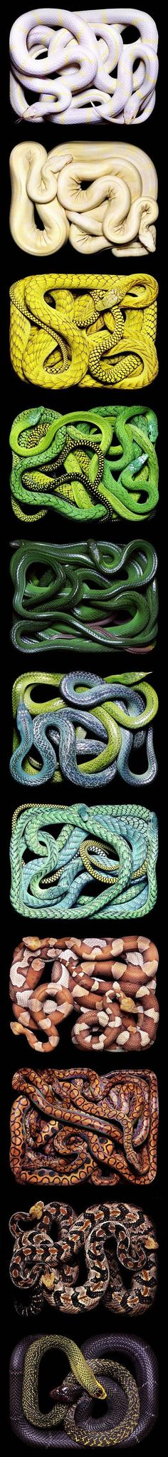 Guido Mocafico I absolutely detest snakes, but this picture is creative and artistic. I figured its note worthy