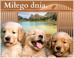 Miłego dnia #milegodnia psy Humor, Dogs, Animals, Kfc, Messages, Animales, Animaux, Humour, Pet Dogs