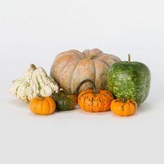 Terrain Fresh Pumpkin Crate #shopterrain