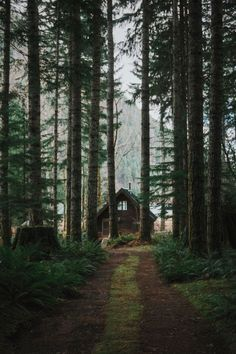 Cabins And Cottages: Relax in the woods. Cabin In The Woods, Into The Woods, Cottage In The Woods, Cabins In The Mountains, Appalachian Mountains, Snowy Mountains, Colorado Mountains, Rocky Mountains, Cabin Homes