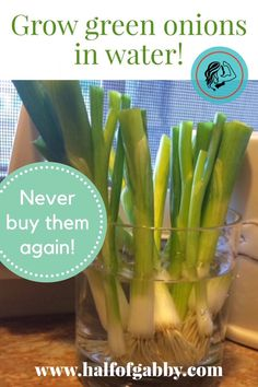 Grow Green Onions in Water! — Half of Gabby Food Nutrition Facts, Healthy Facts, Healthy Tips, Healthy Eating, Healthy Recipes, Lemon Cucumber Mint Water, Cucumber Water Benefits, Onion Benefits, Recipes