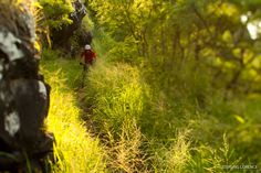 Dreaming of Hawaii singletrack!  Photo of the Day: Sterling Lorence - BIKE Magazine