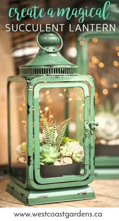 Magic Succulent Lantern House + Home Tips West Coast Gardens is part of Planting succulents - There's magic in the air on summer evenings, and these succulent lanterns add the perfect mood This DIY video shows you how to create the look Cacti And Succulents, Planting Succulents, Planting Flowers, Succulent Terrarium Diy, Garden Terrarium, Indoor Succulent Garden, Succulent Table Decor, Potted Plant Centerpieces, Mason Jar Succulents