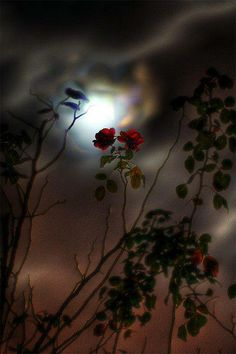 Roses Under a Hazy Moon...By Artist Unknown ...@;}~