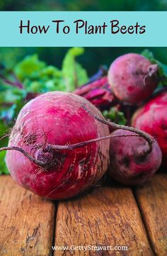 How to plant beets in the garden. Full instructions including photos and great tips to ensure success. From a northern gardener. Site also has terrific recipes.#beets #gardening #howtogrowbeets
