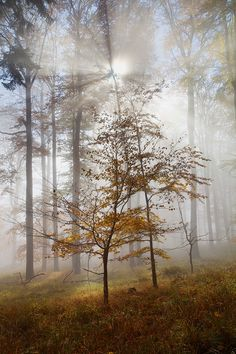 Light in the Mist by Martin Rak on 500px