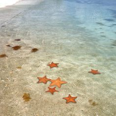 Vieques Puerto Rico: Lighten up in one of the world's brightest bioluminescent bays