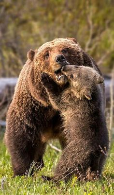 d325b6b7056 Bear with me · Playtime with Mom! Wildlife Nature