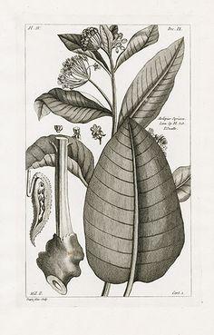 P.J. Buchoz Herbier Artificiel Botanical Prints 1783