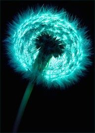 dandelion before the wind. I love dandelions and turquoise so its a perfect fit! Shades Of Turquoise, Shades Of Blue, Turquoise Color, Teal Blue, Fifty Shades, Dandelion Wish, Dandelion Seeds, Dandelion Flower, Fractals