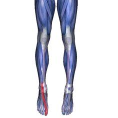 Extensor Hallucis Longus Pain Pattern