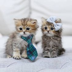 Cutest Kittens that bring smiles monday, october 07 Cute Baby Cats, Cute Kittens, Cute Cats And Kittens, Cute Funny Animals, Cute Baby Animals, I Love Cats, Beautiful Cats, Cat Day, Cat Lovers