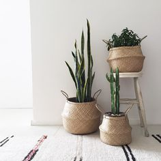 Succulents in seagrass plant baskets!! #greengirldaily_blog